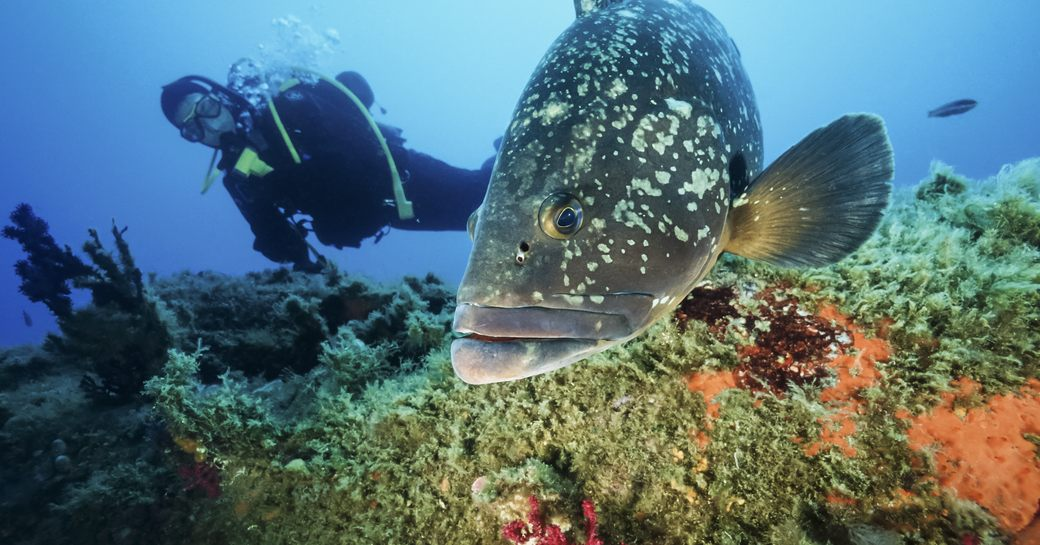 Deep dive: 10 of the best dive spots in the Mediterranean photo 3