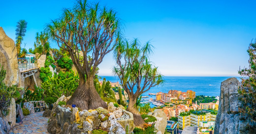 jardin exotique as seen from hilltop of monaco looking down over the town