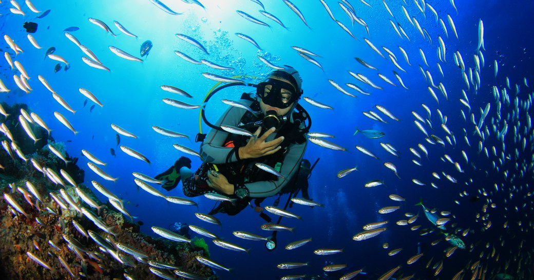 Scuba diving with fish on coral reef in Great Barrier Reef