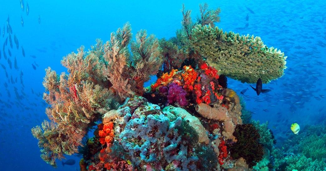 Coral reefs in Crystal rock