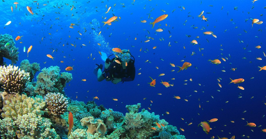 6 Of The Best Dive Spots To Visit On A Thailand Yacht Charter photo 10