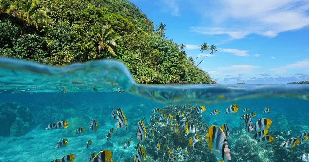 Shoal of fish in Tahiti