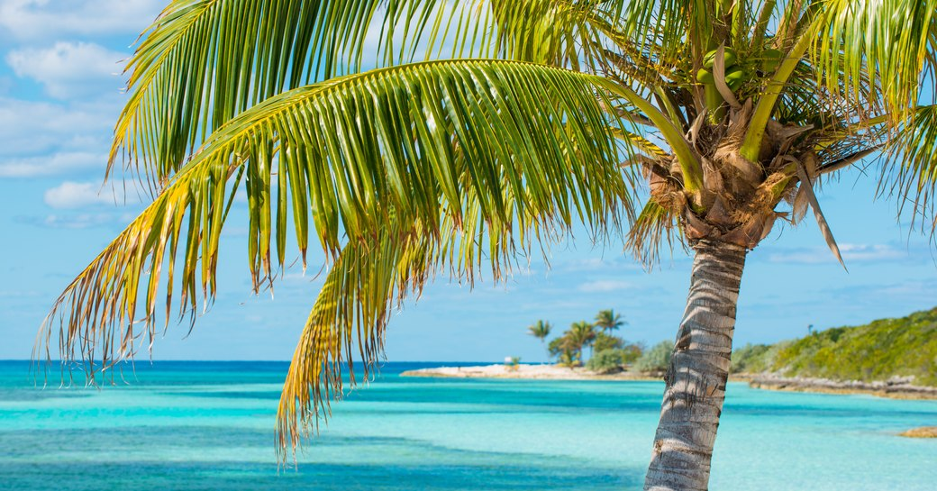 Palm tree and clear blue sea on Berry Islands in the Bahamas