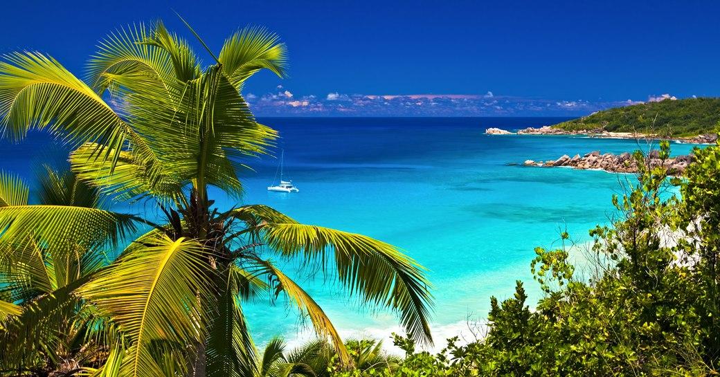 Seychelles palm trees beach