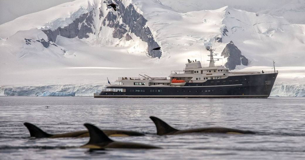dolphins swim nearby expedition yacht LEGEND while on a Norway yacht charter