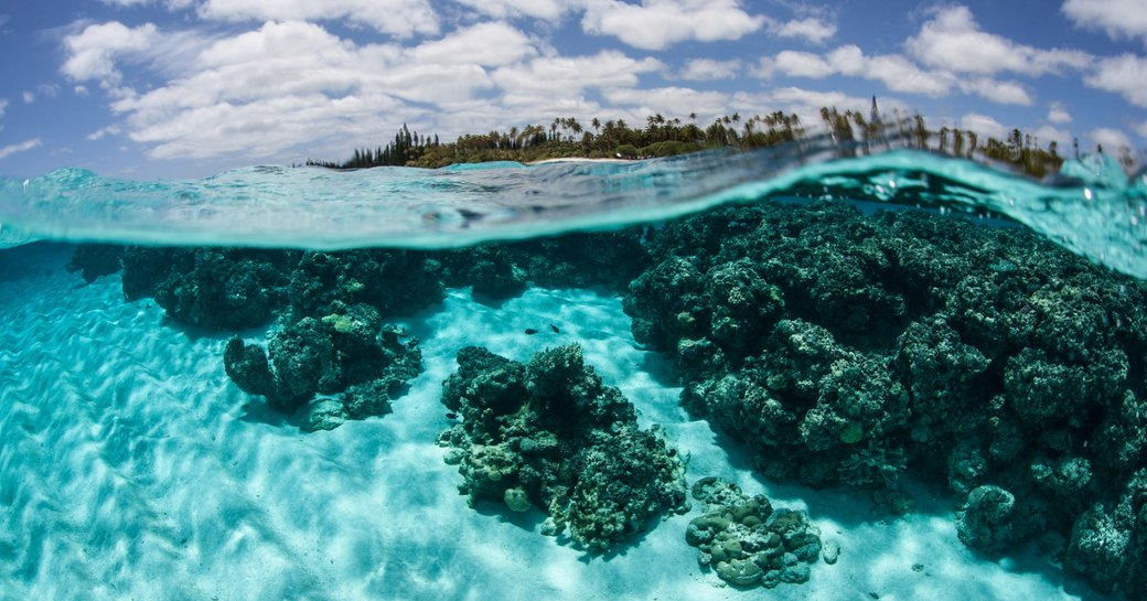Corals grow just under the surface of the water near Isle de Mare near New Caledonia