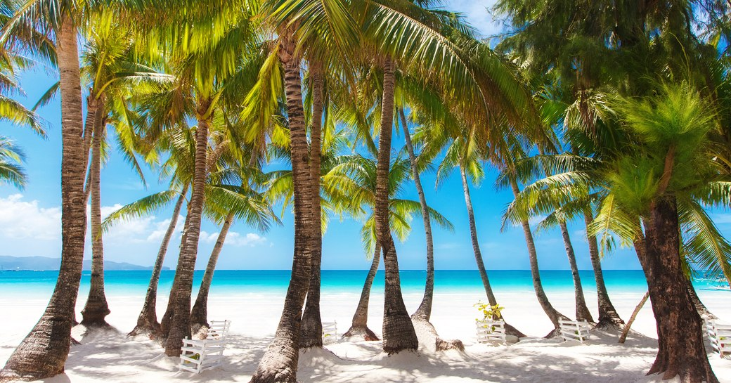 Palm tree lined beach in the Bahamas
