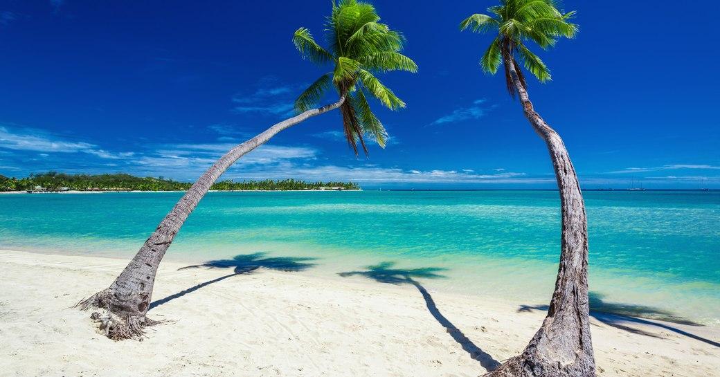 fiji beach trees