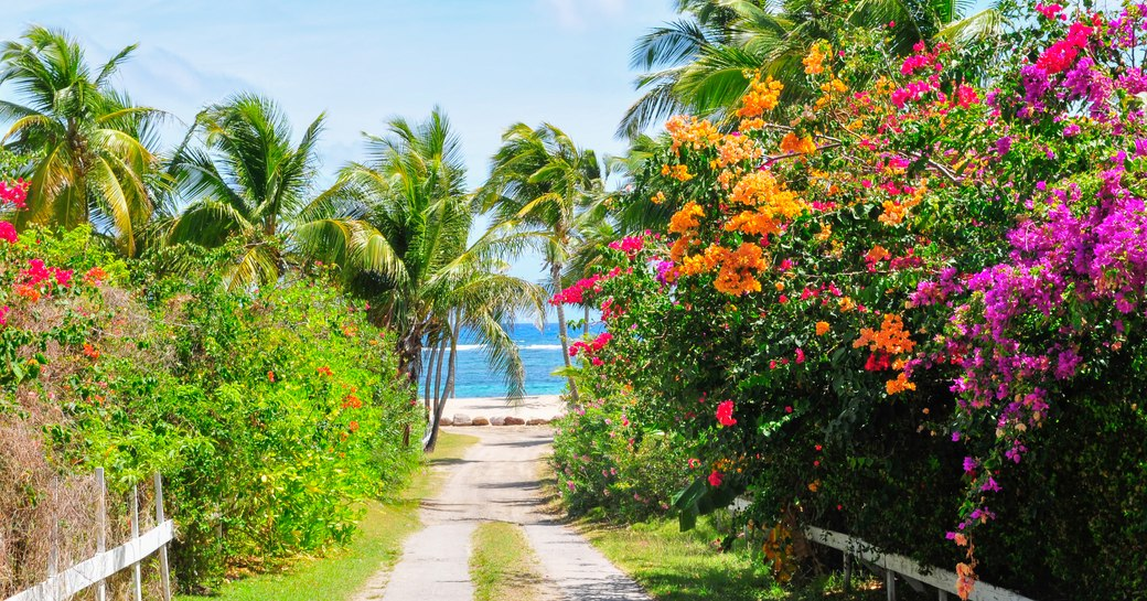 Secrets of the Caribbean: Nevis, the Island of 44 Mangoes photo 4