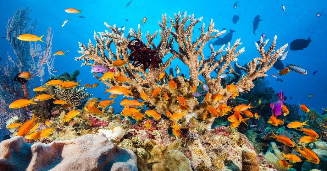 Great Barrier Reef coral reefs