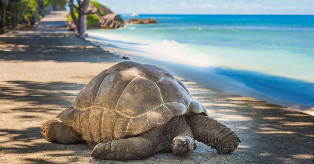 Turtle on beach in the Seychelles