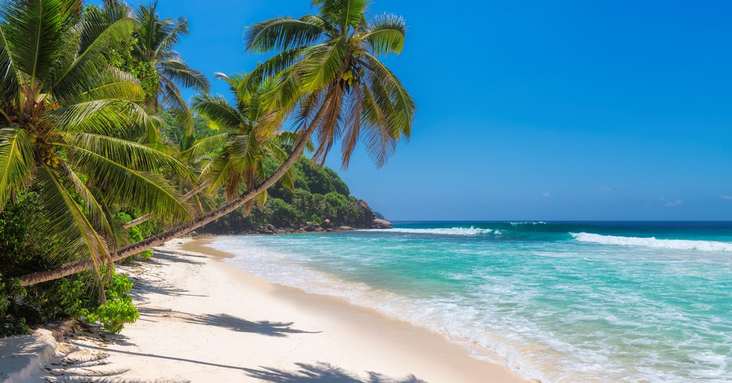 sandy beach in mexico, with blue sea and palm trees over sand