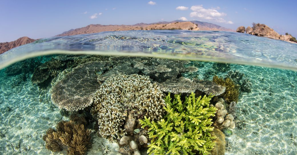 Komodo islands clear water with coral reef