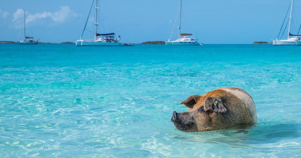 Bahamas Yacht Charter photo 27