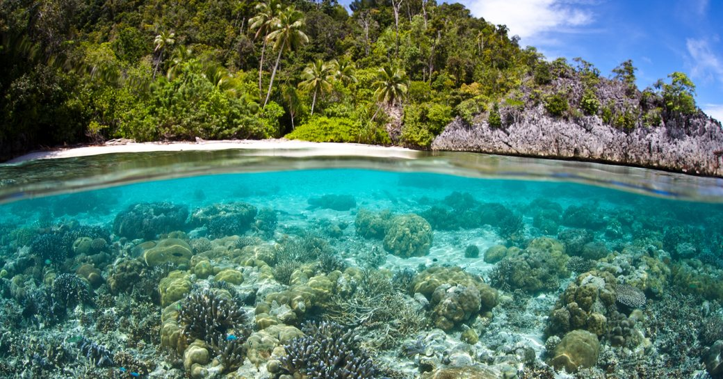 Waters and coral of Misool, Rajat Islands