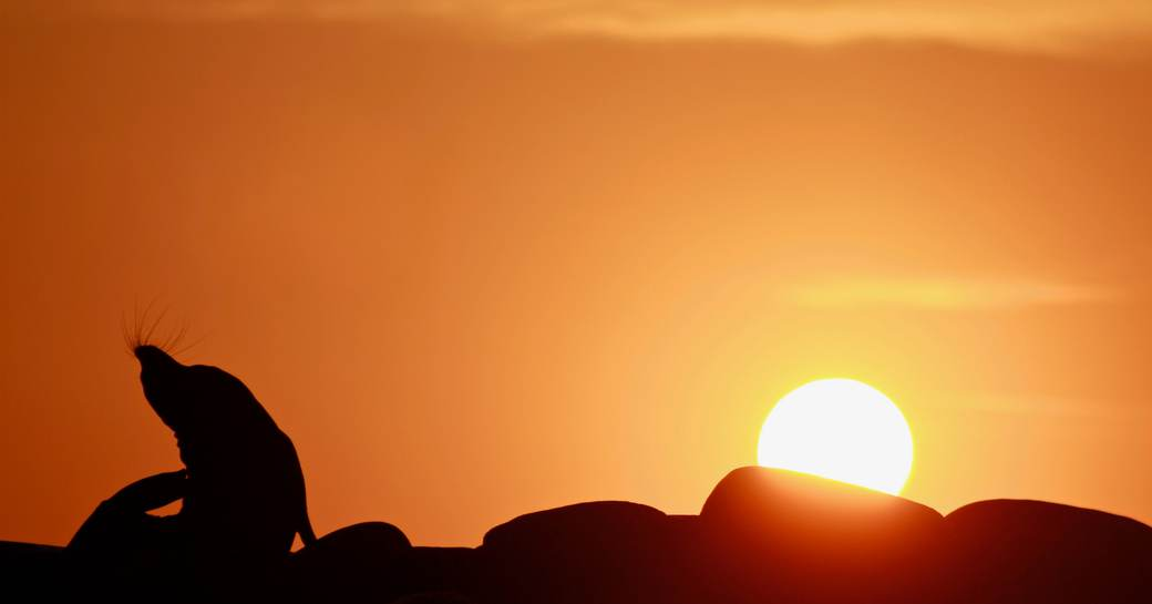 A sealion poses silhouetted against a sunset in the Galapagos