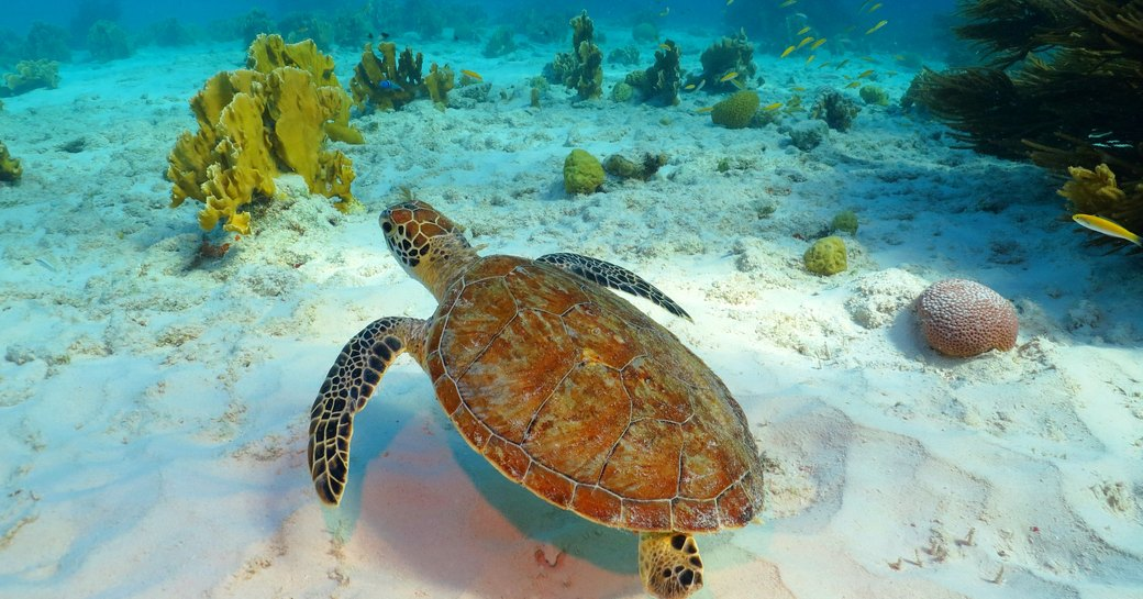 Sea turtle, coral reef and white sandy seabed. Tropical seascape with swimming turtle.