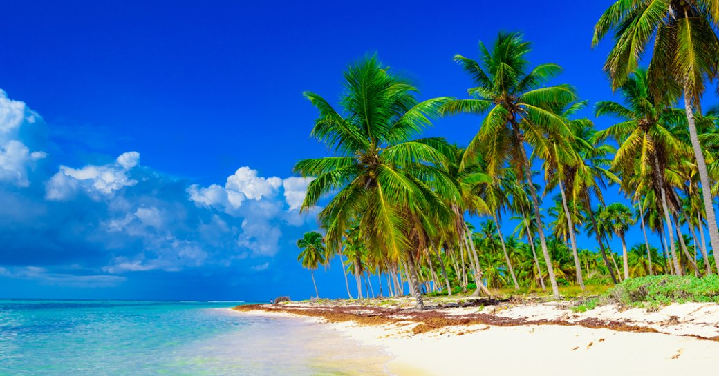white sand beach lined with palm trees and lapped by turquoise waters in the Caribbean