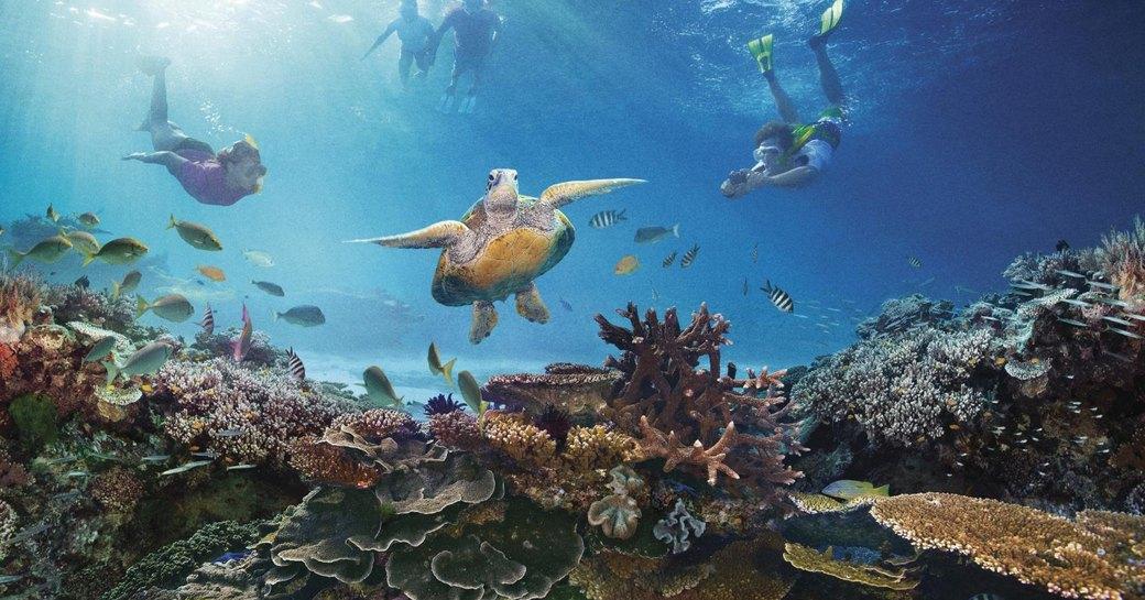Great barrier reef sea turtles