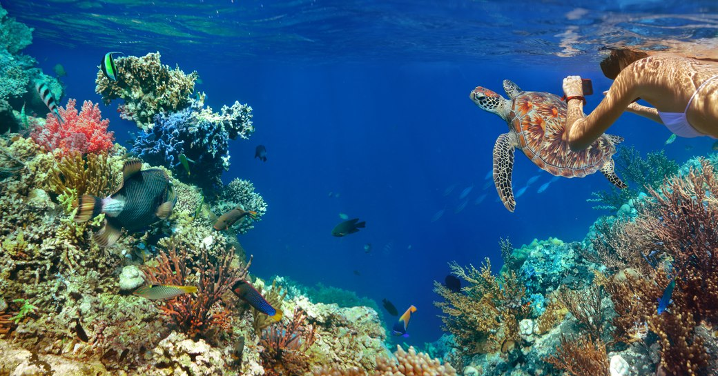 Diving in the Bahamas