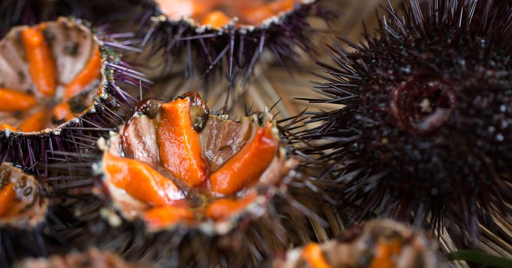 sea urchins are a French speciality