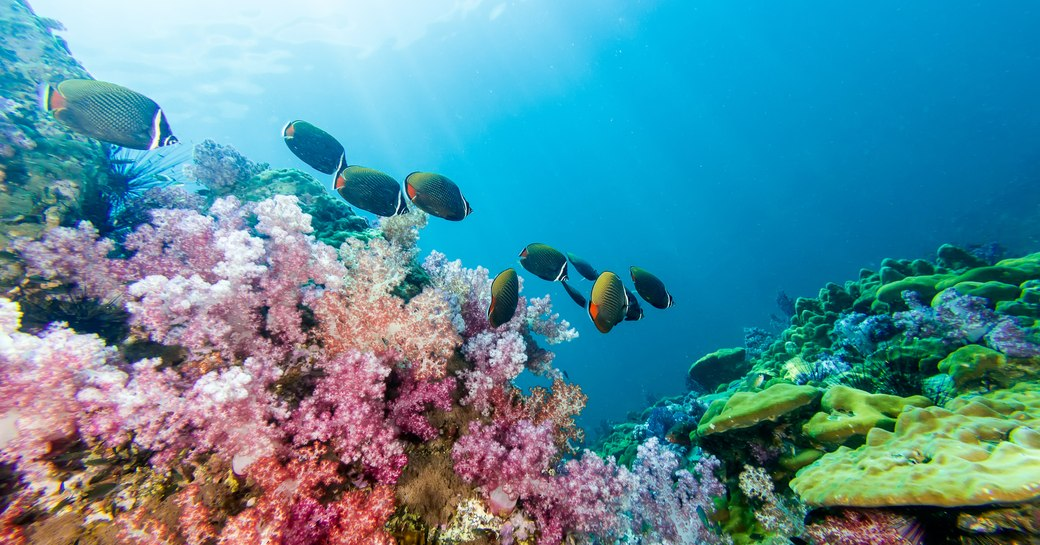 Coral reef Indonesia