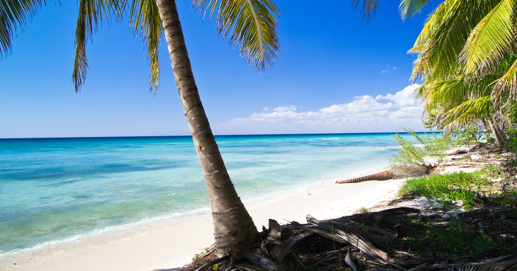 Caribbean beach as seen from the sand with palm tree in foreground and blue sea beyond