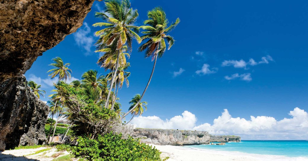 Palm trees blowing in a gentle breeze on a white sand beach