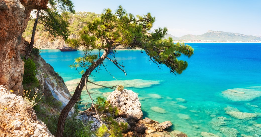 Island in the Mediterranean, with bright blue sea and pine tree