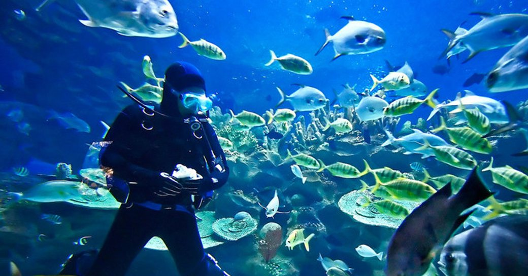 6 Of The Best Dive Spots To Visit On A Thailand Yacht Charter photo 9