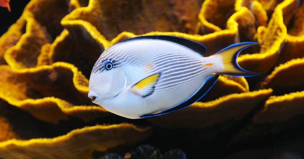 Multicolored fish