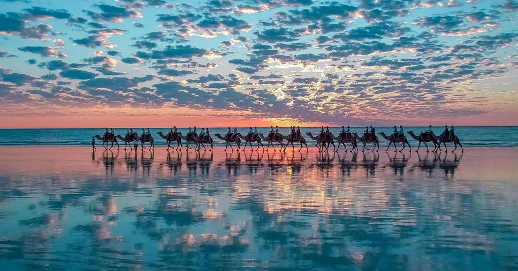 A herd of camels walk along Cable Beach as the sun sets and turns the sky pink