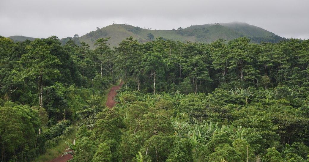 Dense highland forest, Galapagos