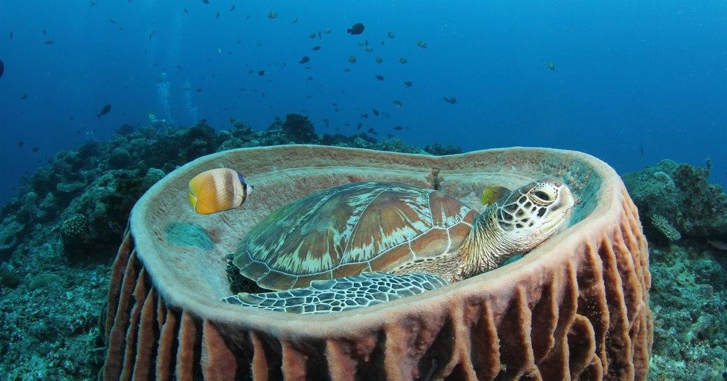 underwater Turtle at Mu Ko Similan National Park in Thailand