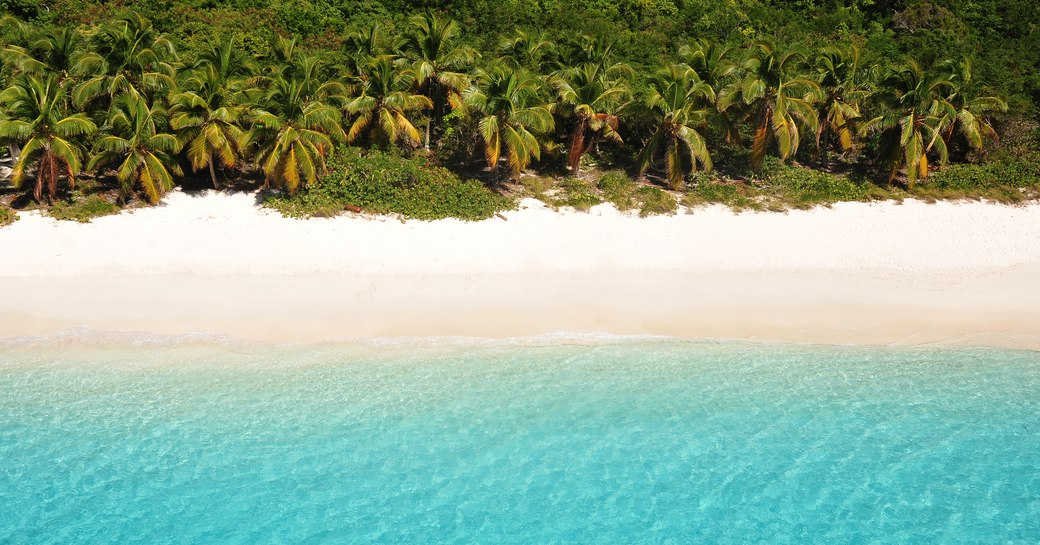 secluded sandy beach backed by palm trees in the British Virgin Islands