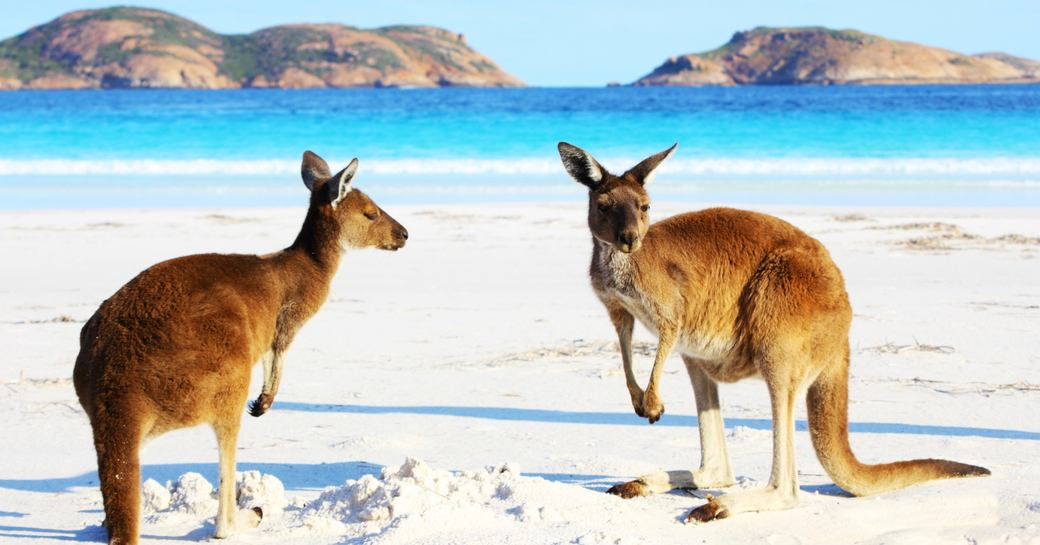 The Complete Guide to Luxury Yacht Charters in Australia photo 21