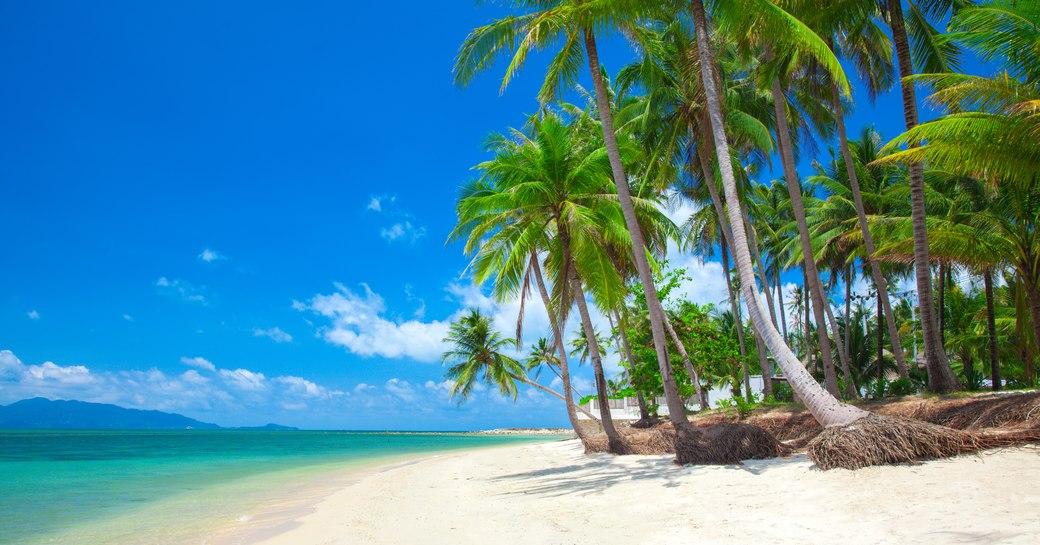 Blue sea and palm tress and white sand beach of Antigua, Caribbean