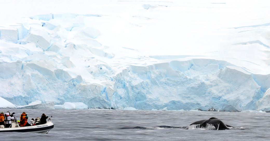 Expedition Yacht LEGEND Open For Winter Charters In Antarctica photo 1
