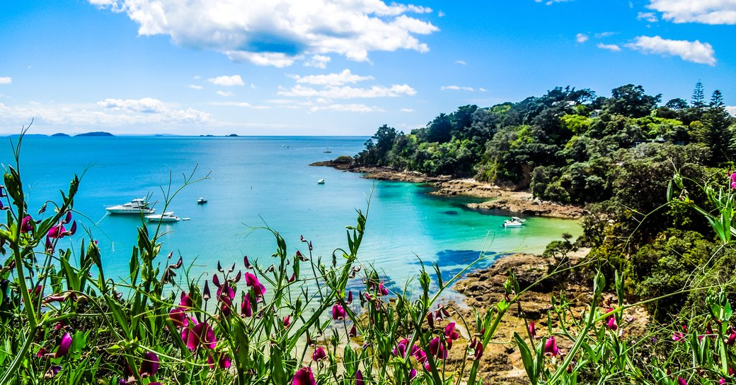 Hekerua Bay on Waiheke Island in New Zealand with sail boats on the water below and pretty purple flowers in the foreground