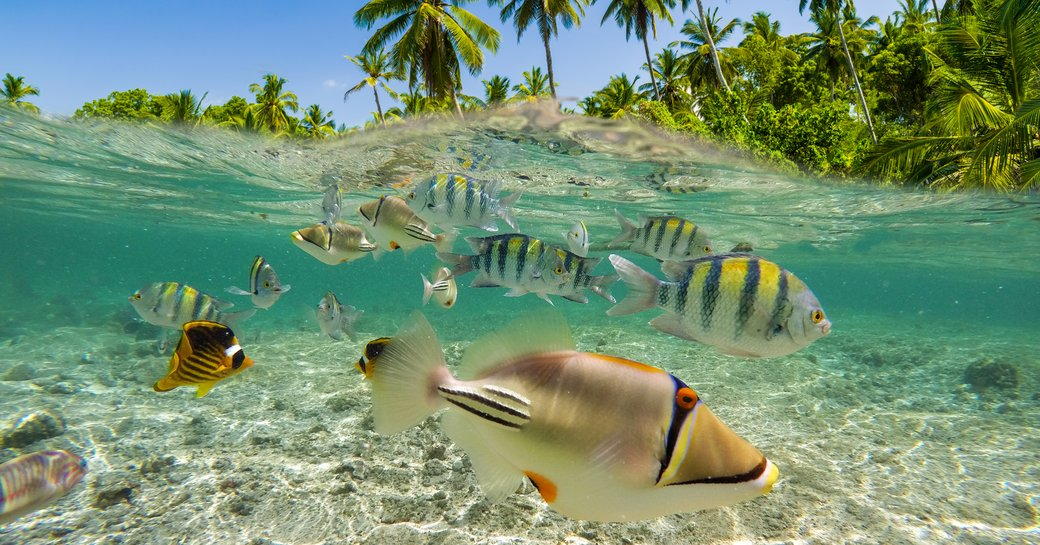 Underwater Scene With Reef And Tropical Fish. Snorkeling in the tropical sea