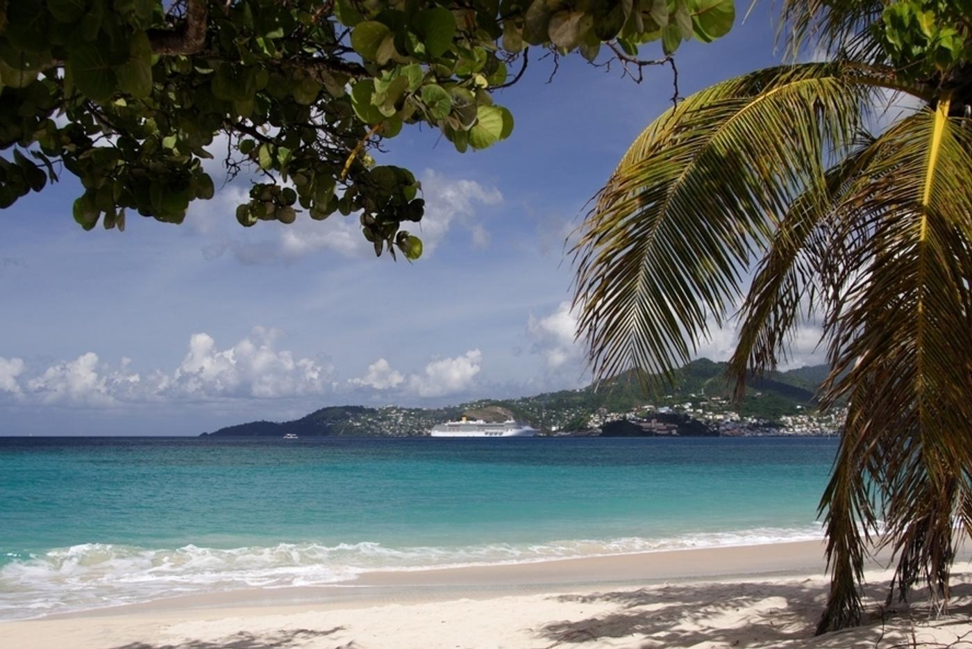 Sandy beach with single trees