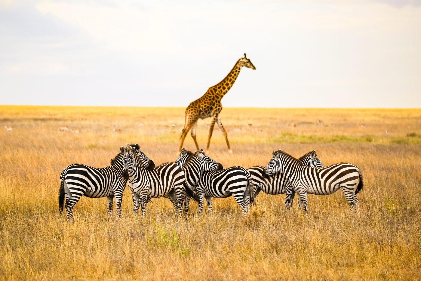 Photo Tour of East Africa 3