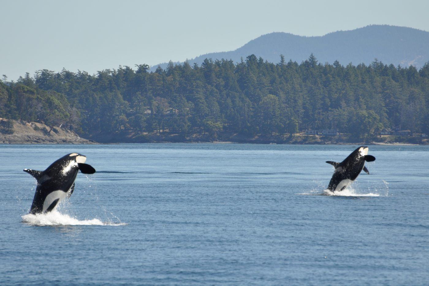 Photo Tour of British Columbia 10