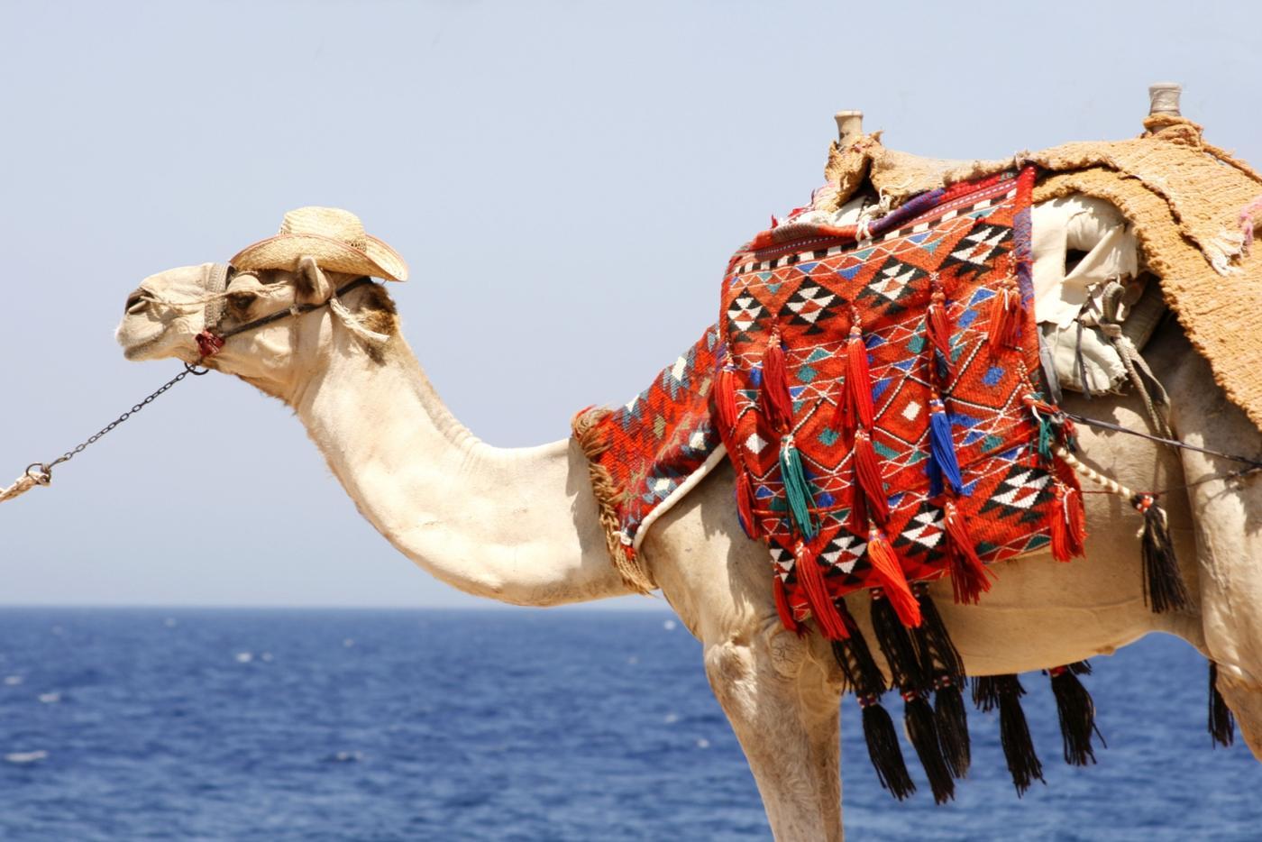 Photo Tour of Egypt & Red Sea 2