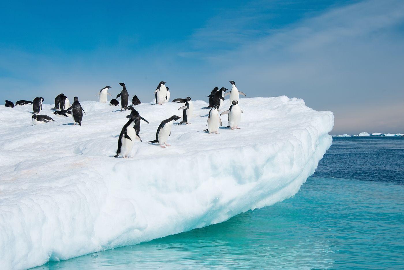Photo Tour of Antarctica 4