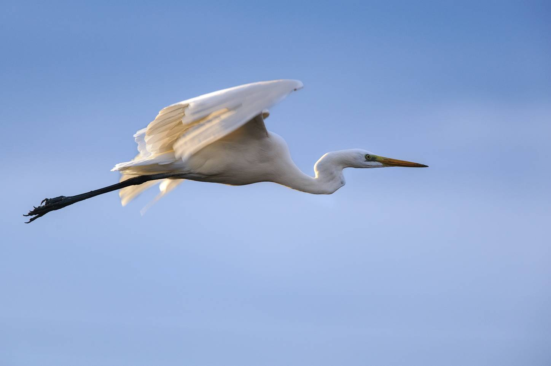 Thanda Bird Walk Image 7
