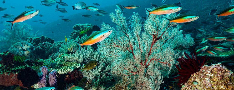 Rhone Marine Park Image 5
