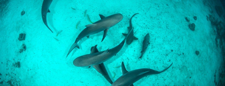 The Aquarium at O'Brien's Cay Image 7