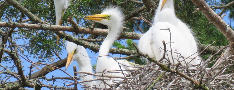 Thanda Bird Walk Image 5