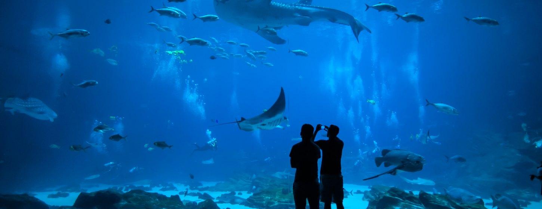 Oceanographic Museum of Monaco Image 1